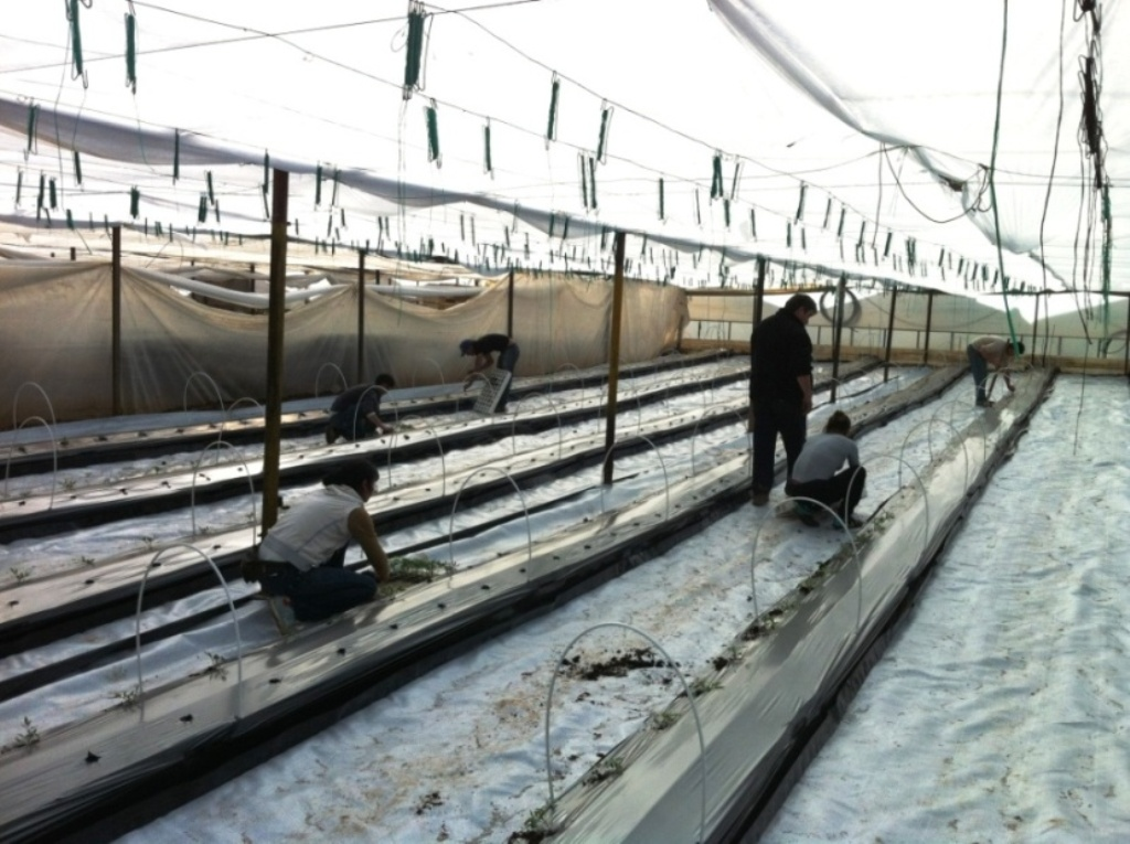 Installation of Hydroponic cultivation